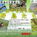 【イベント】野鳥の写真展示 小城でも見られる野鳥たち (9月24日~30日開催)