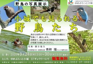 野鳥の写真展示_ポスター_01
